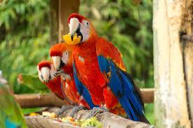 Ako sa nestať papagájom a neučiť sa od žiab lietať?